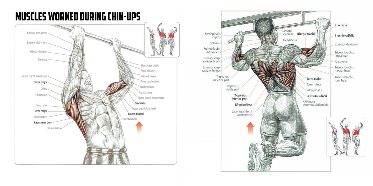 Perfect Pull Up Exercise with Power Tower - 25 Tips for Best Results